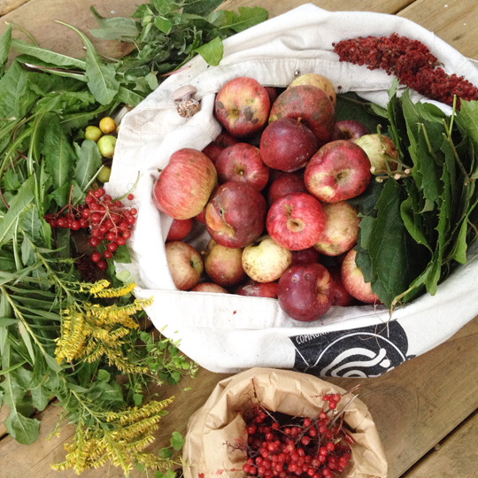 Clockwise from top: 3 varieties of feral apples, sumac, grape leaves, false Solomon's seal berries, goldenrod (decorative), high bush cranberries, dandelion greens