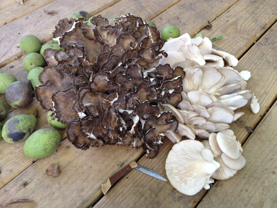 Black walnuts from our property, hen, oysters